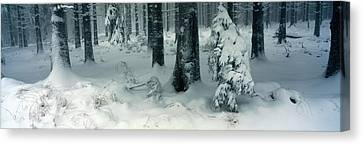 Wintry Fir Forest Canvas Print by Ulrich Kunst And Bettina Scheidulin