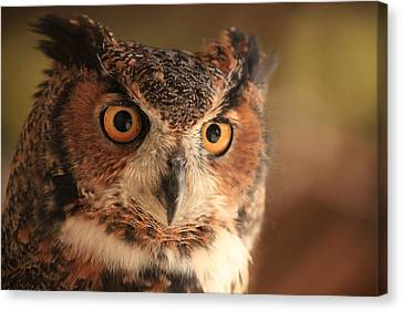 Canvas Print featuring the photograph Wise Old Owl by Doug McPherson