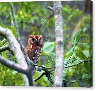 Wise Young Owl Canvas Print