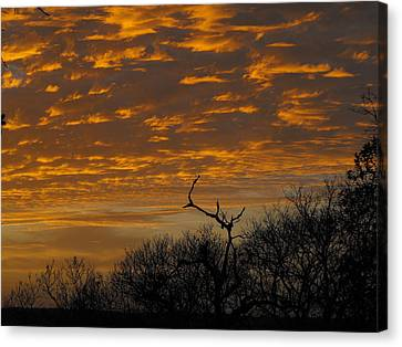 Wispy Sunset Clouds Canvas Print by Rebecca Cearley