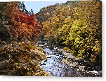 Wissahickon Canvas Print - Wissahickon Creek In Fall by Bill Cannon