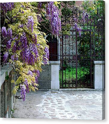 Wisteria In Bloom Canvas Print - Wisteria And Gate In Venice Italy by Greg Matchick