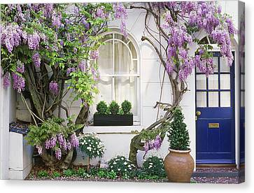 Wisteria Climbing Up Wall Of House With Window Box Canvas Print by Linda Burgess