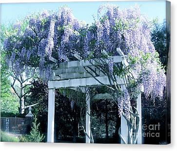 Wisteria In Bloom Canvas Print - Wisteria In Bloom  by Nancy Patterson