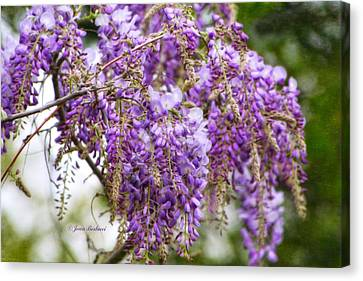 Canvas Print featuring the photograph Wisteria by Joan Bertucci
