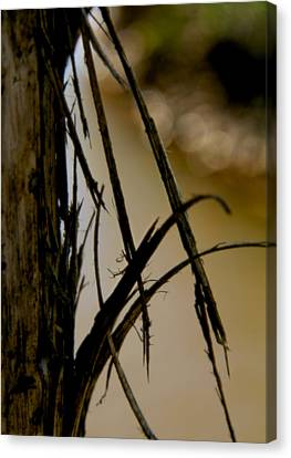 With Wings Unfurling Canvas Print by Odd Jeppesen