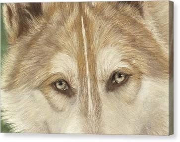 Wolf Eyes Canvas Print by Teresa LeClerc