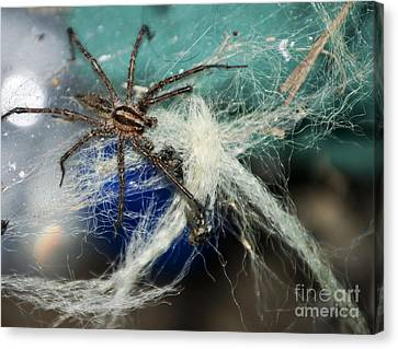 Wolf Spider Eating Canvas Print by Art Hill Studios