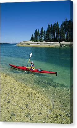 Woman Kayaking, Penobscot Bay, Maine Canvas Print by Skip Brown