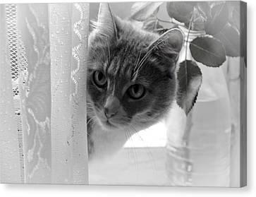 Wondering. Kitty Time Canvas Print by Jenny Rainbow