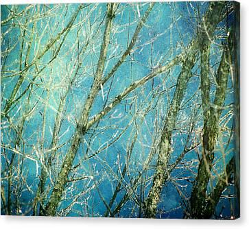 Wonderland Canvas Print by Amy Tyler