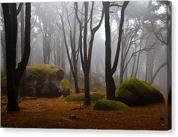 Forest Canvas Print - Wonderland by Jorge Maia