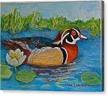 Wood Duck Canvas Print by Joan Landry