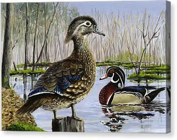 Wood Duck Canvas Print by Paul Gardner