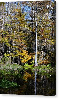 Wood Duck Pond Canvas Print by Melanie Moraga