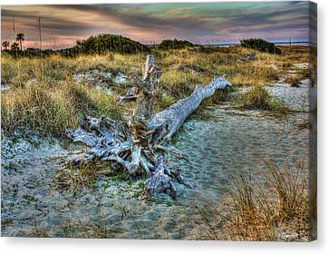 Canvas Print featuring the photograph Wood by Joetta West
