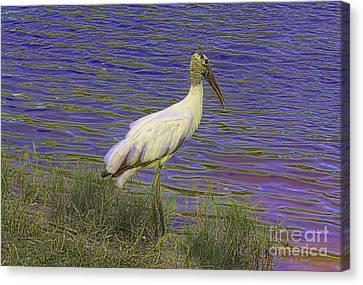 Wood Stork By The Pond Canvas Print by Deborah Benoit