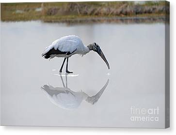 Canvas Print featuring the photograph Wood Stork Eating by Dan Friend