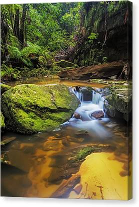 Woodford's Gem Canvas Print by Mark Lucey