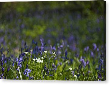 Woodland Flowers Canvas Print by Trevor Chriss