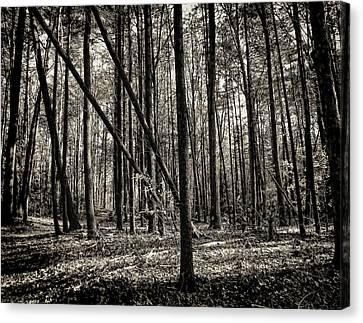 Woodland Canvas Print by Lourry Legarde