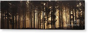Cannock Chase Canvas Print - Woodland Sunrise Panorama by Ann Garrett