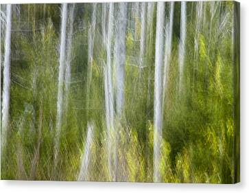 Woods Abstact Canvas Print by Andrew Soundarajan