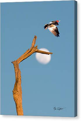 Woody Flying By The Moon Canvas Print