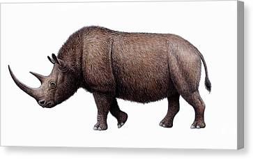 Woolly Rhinoceros, Artwork Canvas Print