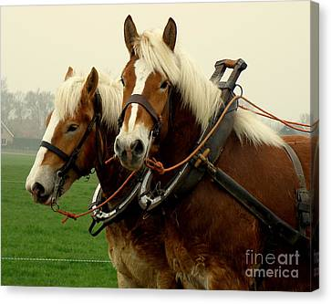 Canvas Print featuring the photograph Work Horses by Lainie Wrightson