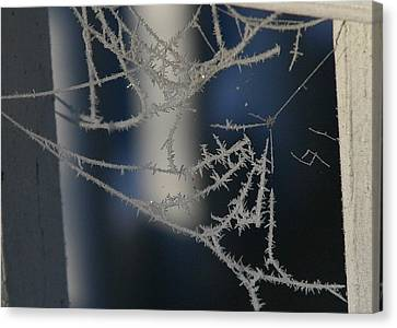 Work Of Spider And Winter Canvas Print