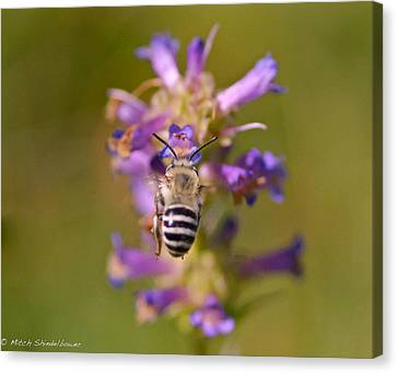 Canvas Print featuring the photograph Worker Bee by Mitch Shindelbower