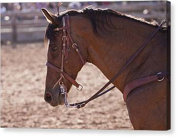 Working Cow Pony Canvas Print by Michelle Wrighton