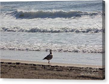 Wounded Seagull 4 Seagulls Birds Photos Beach Beaches Sea Ocean Oceanview Scenic Seaview Art Pics Canvas Print by Pictures HDR