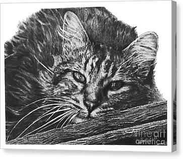 Canvas Print featuring the drawing Wyatt by Marianne NANA Betts