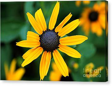 Canvas Print featuring the photograph Xanthinus by Adrian LaRoque