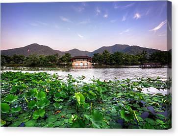 Xianghu - Lotus (xiaoshan) Canvas Print by Andy Brandl