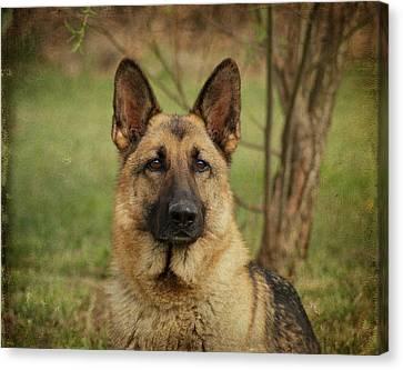 Yahtzee - German Shepherd Canvas Print by Sandy Keeton