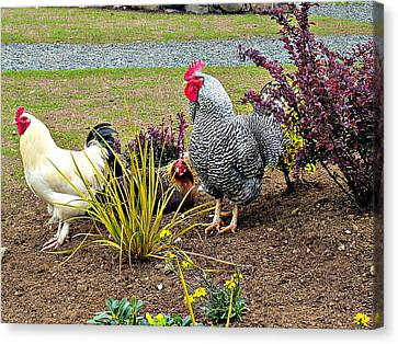 Yard Chickens Canvas Print by Jo Sheehan