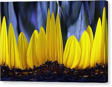 Florida's State Wildflower Canvas Print by Skip Nall