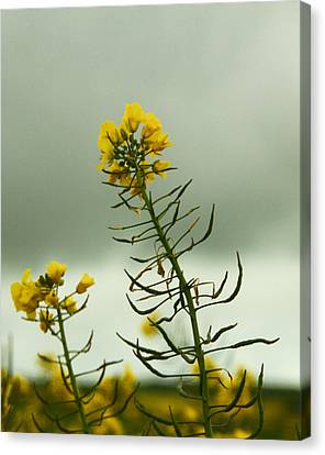 Yellow And Grey Canvas Print by Jacqui Collett