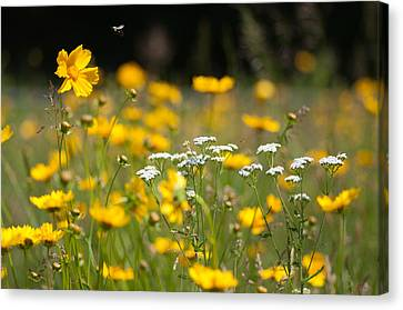 Yellow And White Canvas Print by Ron Smith