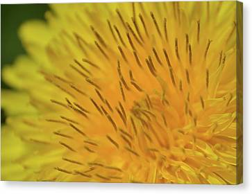 Canvas Print featuring the photograph Yellow Beauty by JD Grimes