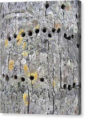 Yellow Bellied Sapsucker And Coconut Palm Canvas Print