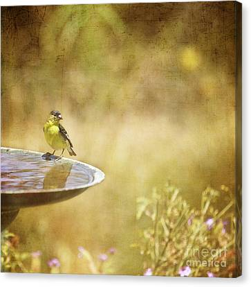 Yellow Bird Upon A Fountain Canvas Print