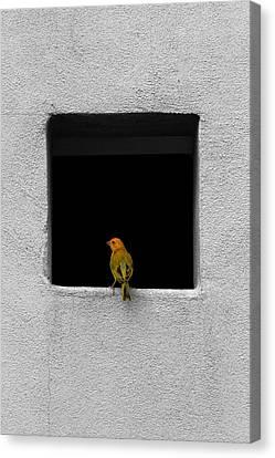 Yellow Birdie On The Window Sill Canvas Print