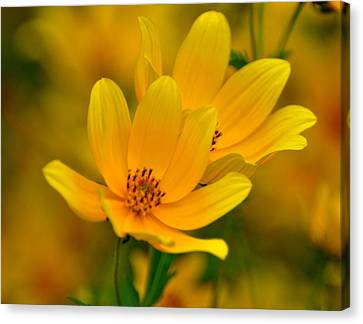 Canvas Print featuring the photograph Yellow Blaze by Marty Koch