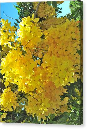 Yellow Blossom Canvas Print by Irina Zilbermanas