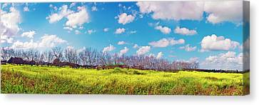 Yellow Blue And Trees Canvas Print by Meir Ezrachi