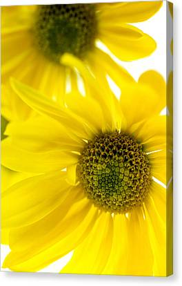 Yellow Bright Yellow Canvas Print by Brad Rickerby